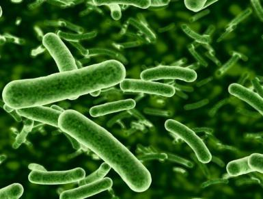 Antibiotic-resistant-bacteria-gut-dysbiosis-autism