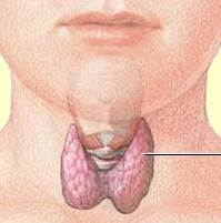 Thyroid-Gland-in-Neck