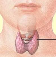 Thyroid-Gland-in-Neck